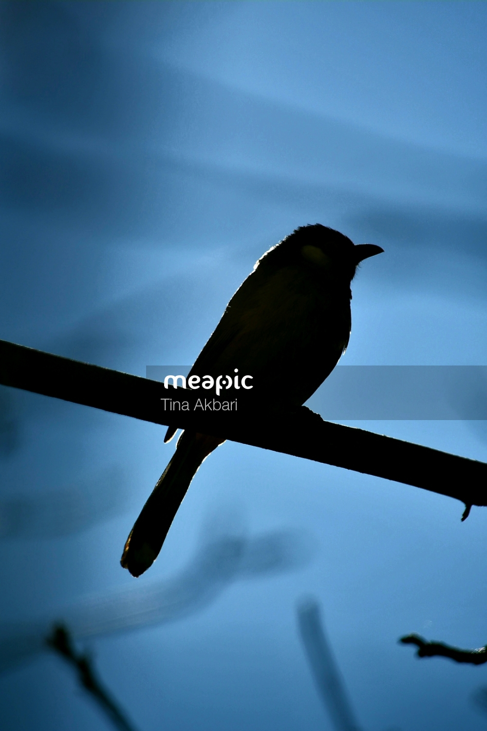 Bird Stock Photo · Meapic