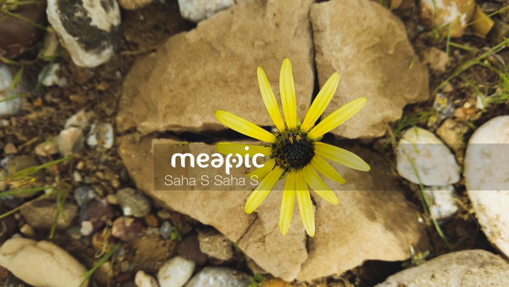 Flower Stock Photo · Meapic