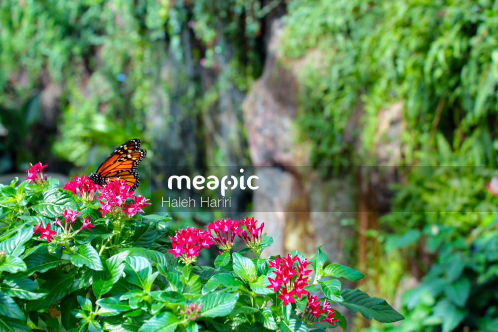 Color Of Nature Stock Photo · Meapic